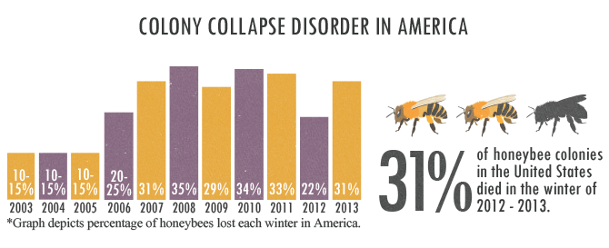 Bring Back The Bees - Colony Collapse Disorder In America Trend