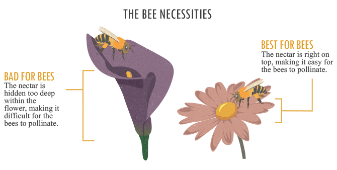 Bring Back The Bees - Better for Bee Flower Comparison