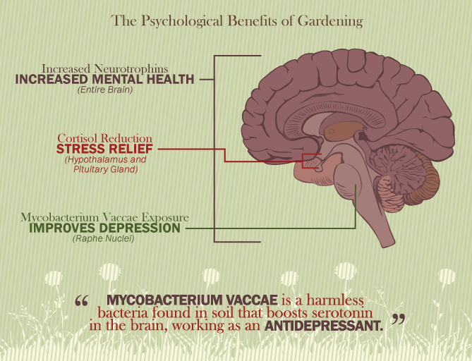 Gardening The Wonderdrug - The Mental Benefits of Gardening