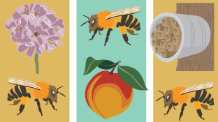 Creating a Bee-Friendly Garden