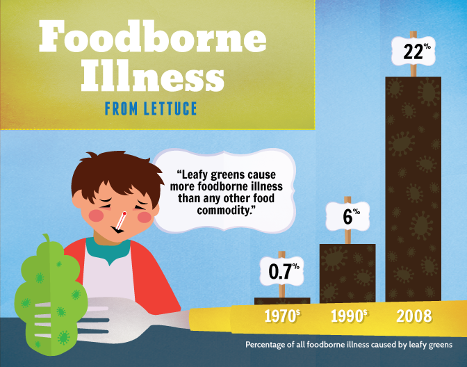 Foodborne Illness | Growing Your Own Salad Greens