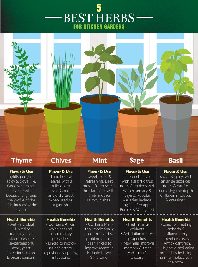 Kitchen Gardening - Five Best Herbs For Small Kitchen Gardens
