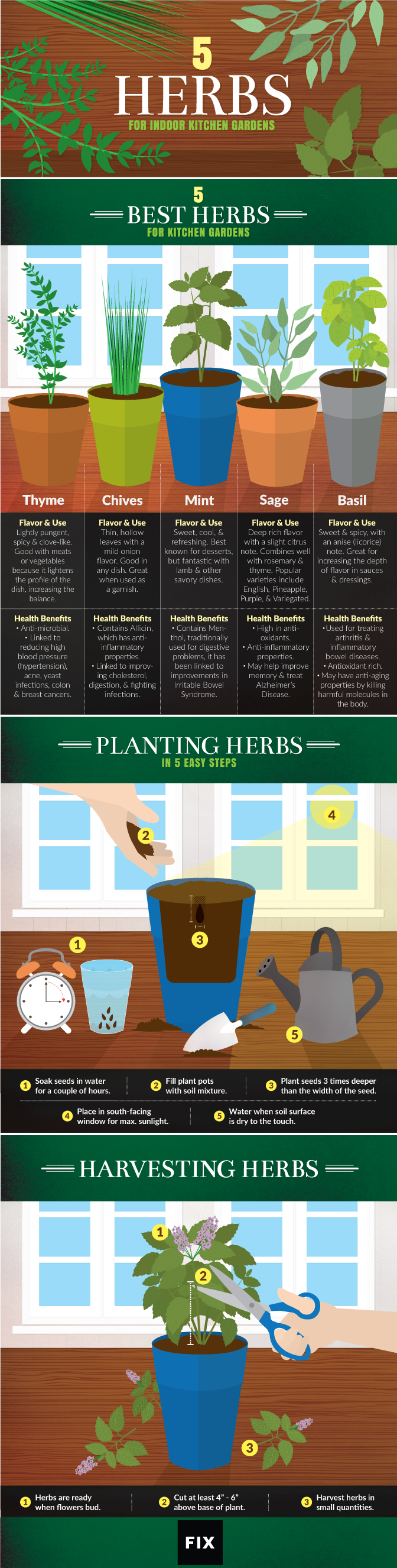 Kitchen Gardener Magazine 5 Herbs For Kitchen Gardens Modern Agriculture Magazine