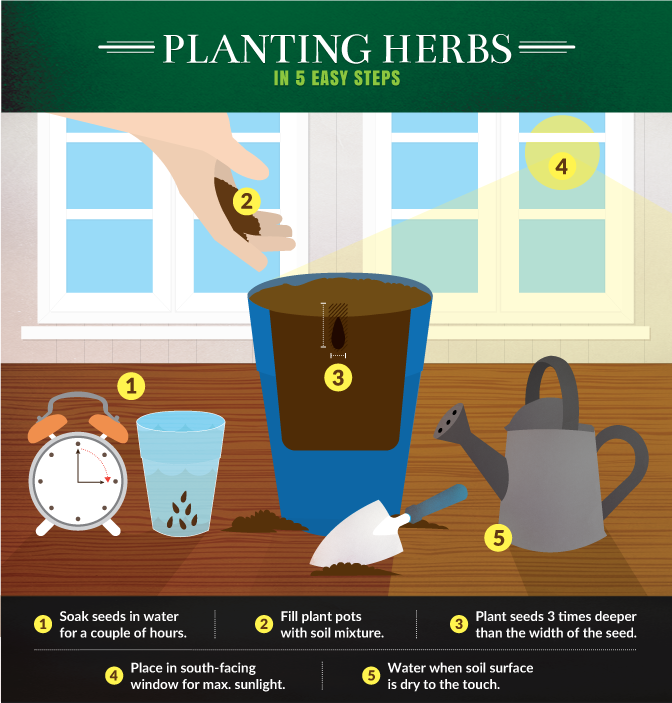 Kitchen Gardening   Planting Herbs In Five Easy Steps
