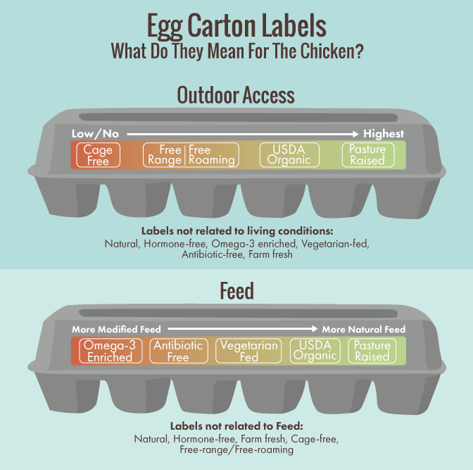 Egg Carton Labels: What Do They Mean for the Chicken?