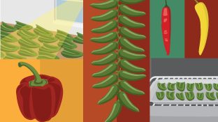 Hot Hints for Growing Chili Peppers at Home