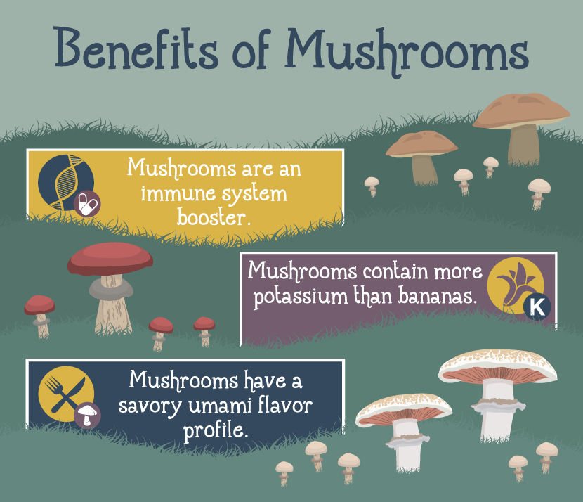 Growing Mushrooms at Home: The Benefits of Mushrooms