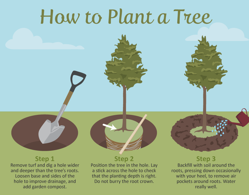 Selecting The Right Tree For Your Garden Fix