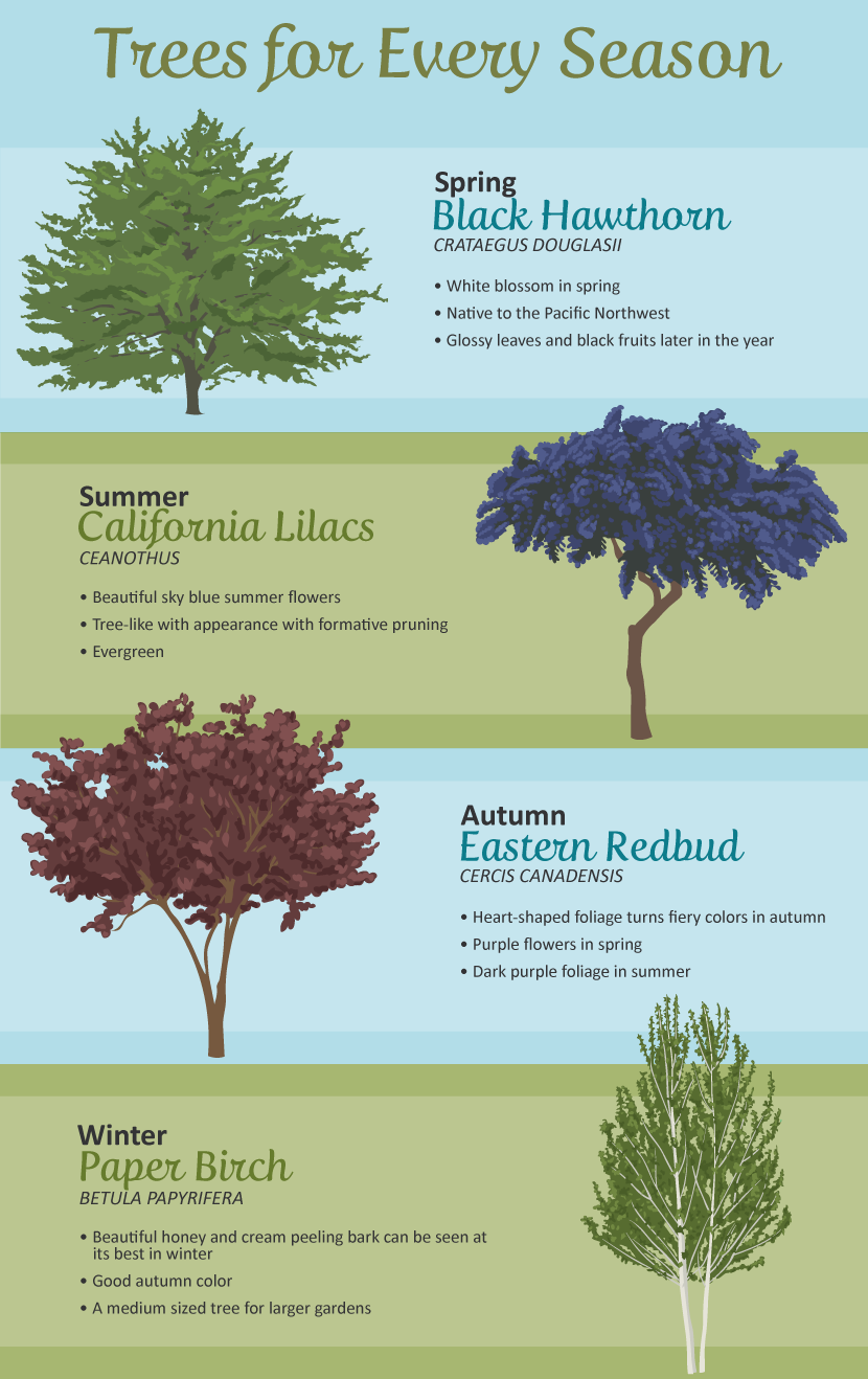 Selecting the right tree for your garden for Great small trees for landscaping