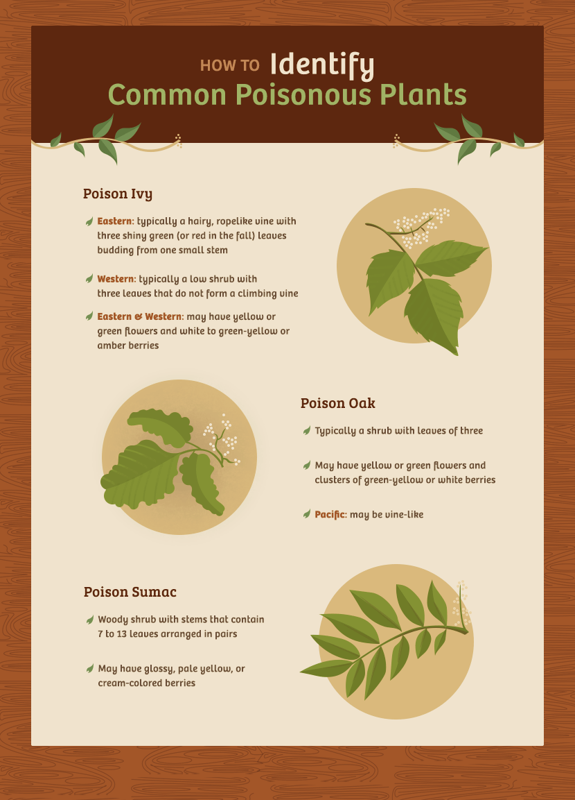 Poisonous Plants - How to Identify Common Poisonous Plants