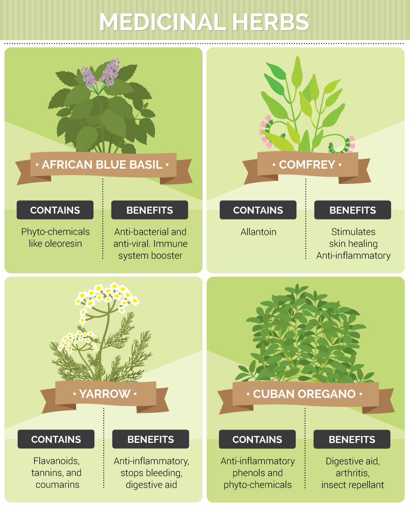 Types of Medicinal Herbs