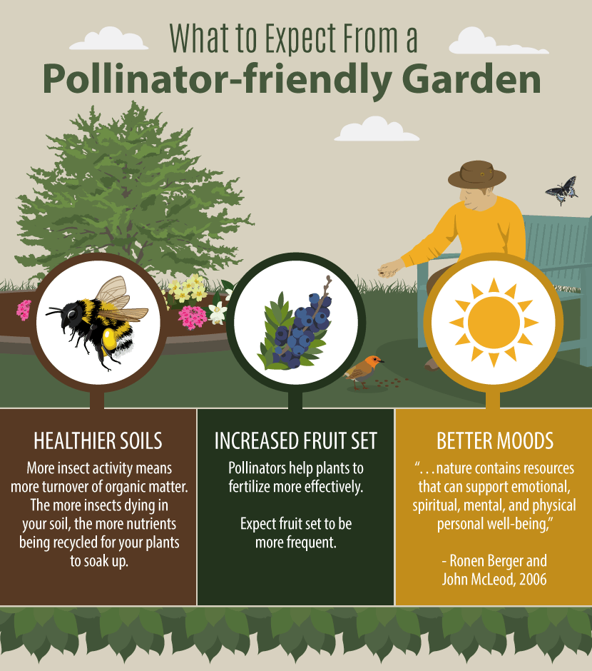 Creating A Native Pollinator Garden: What To Expect
