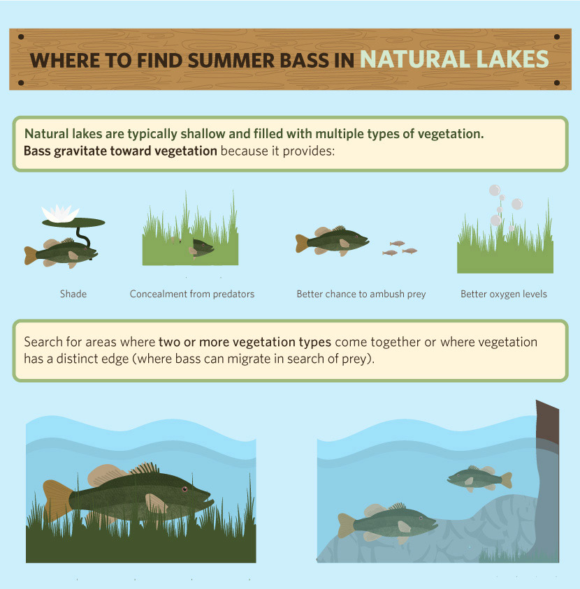 Catching Summer Bass: Where to Find Bass in Natural Lakes