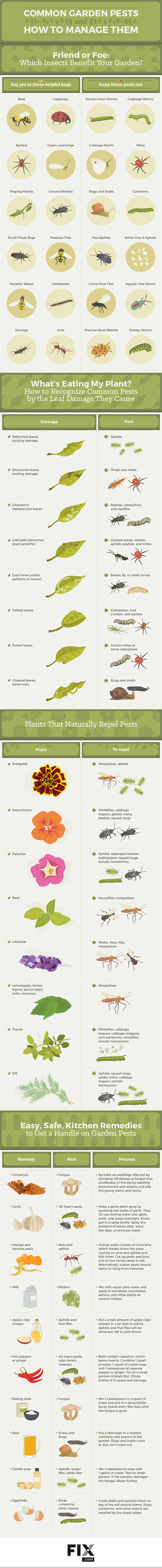 Good bugs, bad bugs for companion planting