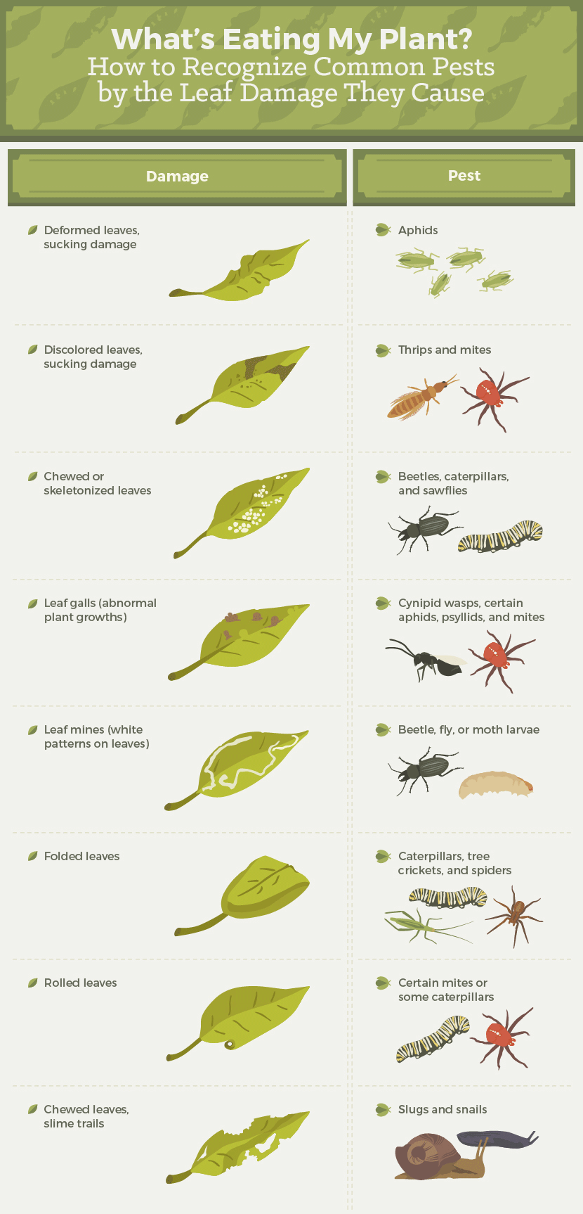 How to Recognize Garden Pests by Leaf Damage