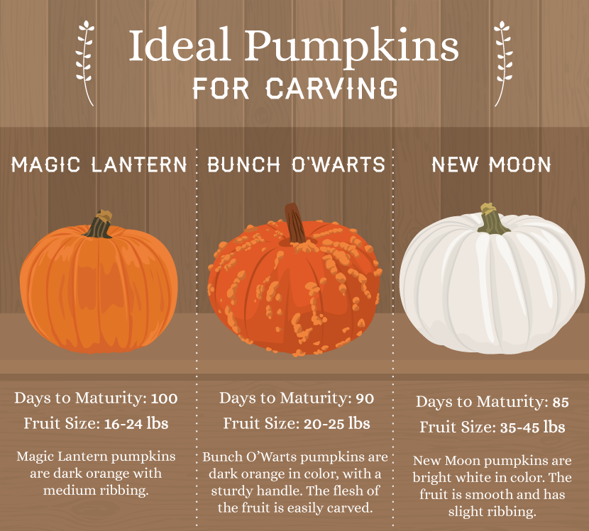 Best Pumpkins for Carving