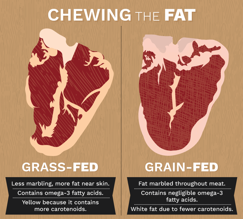 Grass Fed Beef: Fat Content in Beef