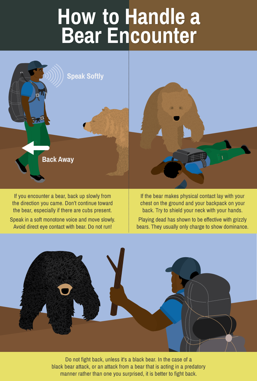 How to Handle a Bear Encounter