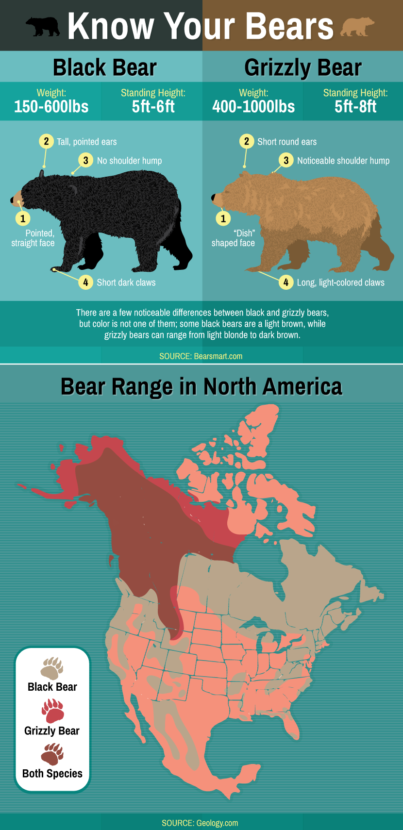 Differences in Bear Species