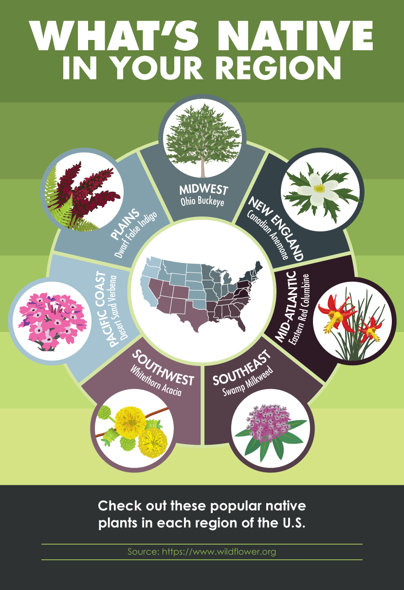 Eco Landscaping: Native Plants by Region
