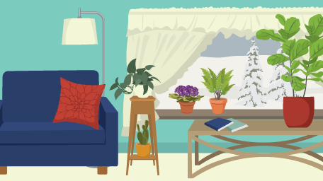 Guide to Winter Houseplants
