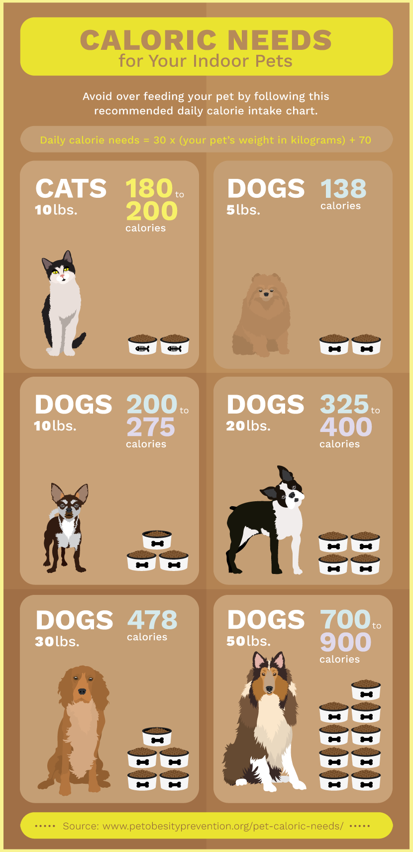 Calories Needed for Indoor Pets