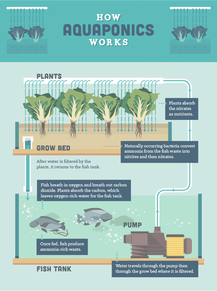 Aquaponics: The Cost-Effective, Cyclical Way to Raise Fish and Grow