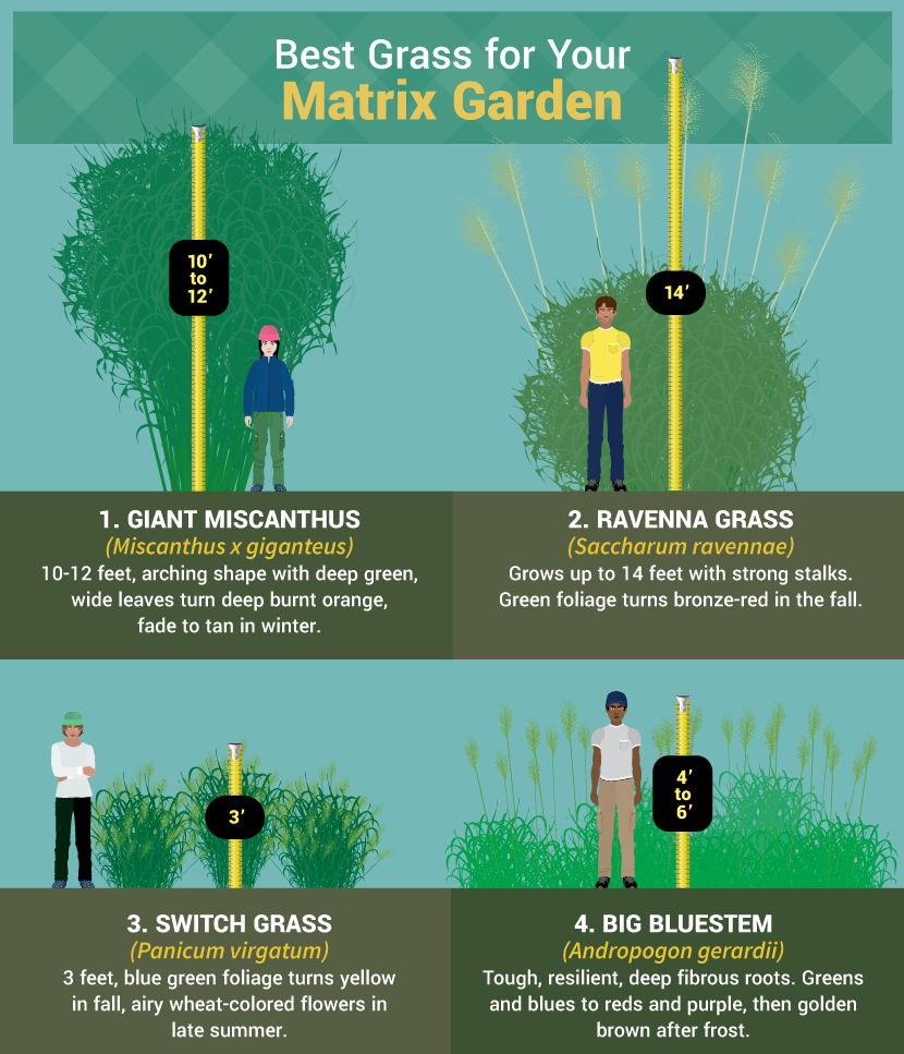 Best Grass for a Matrix Garden