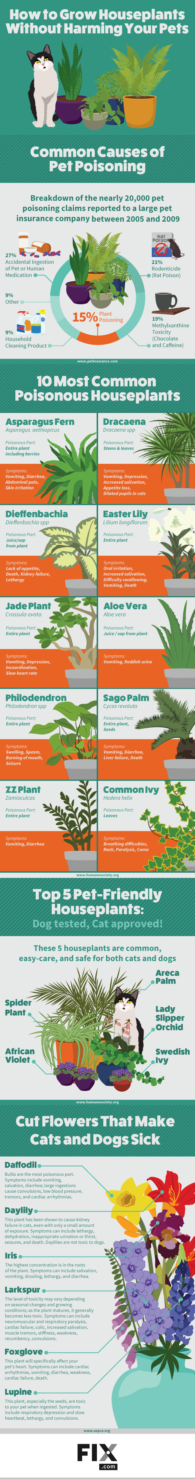 Houseplants that are toxic to your cats and pets infographic