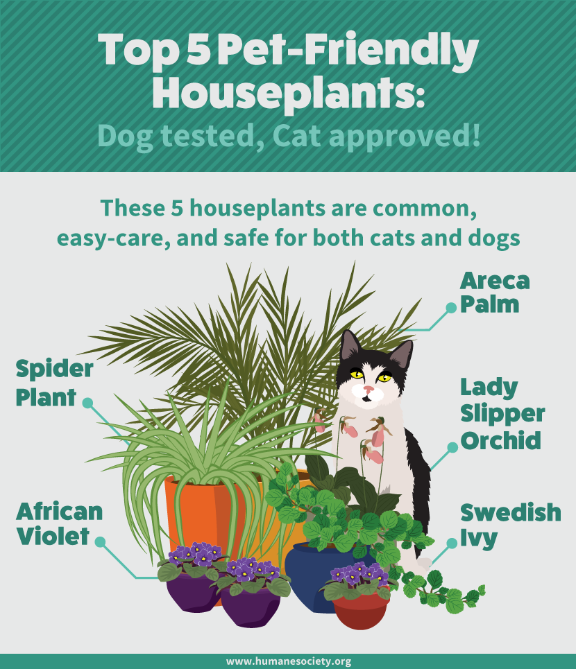 Design Plants Safe For Dogs houseplants safe for cats and dogs fix com pet friendly houseplants