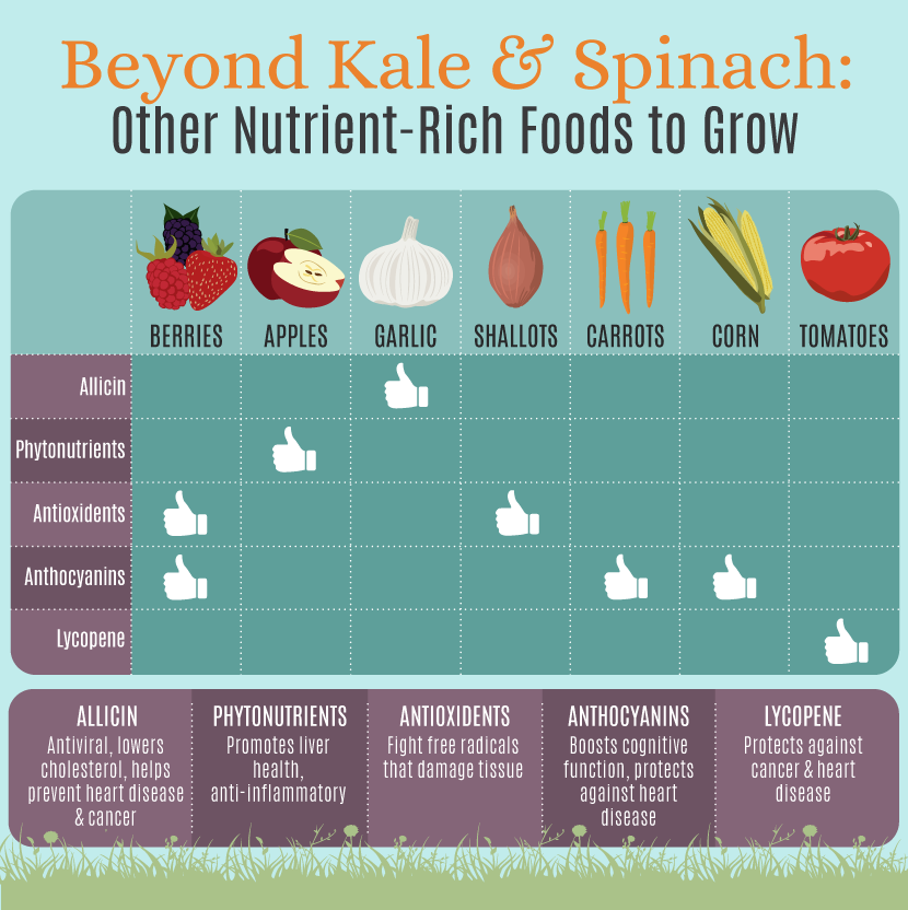 Nutrient Rich Food to Grow
