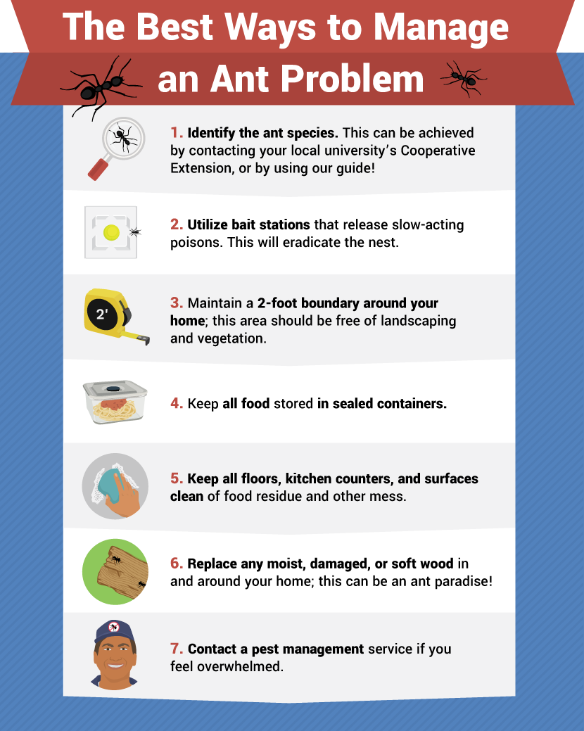 Eliminating Ants - How to Get Rid of Ants