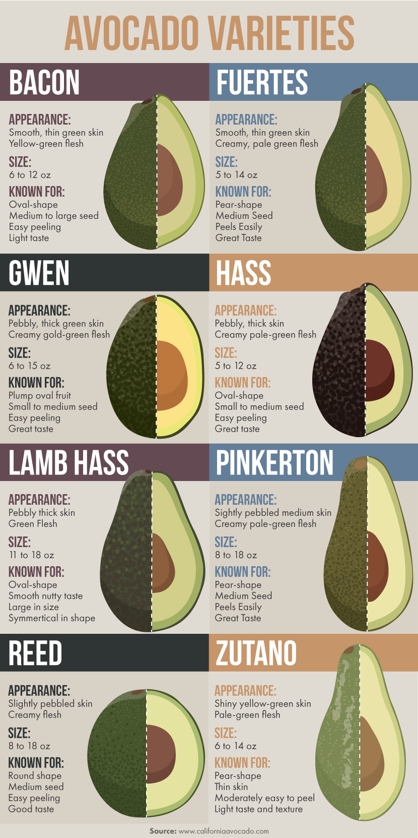 Different Avocado Varieties