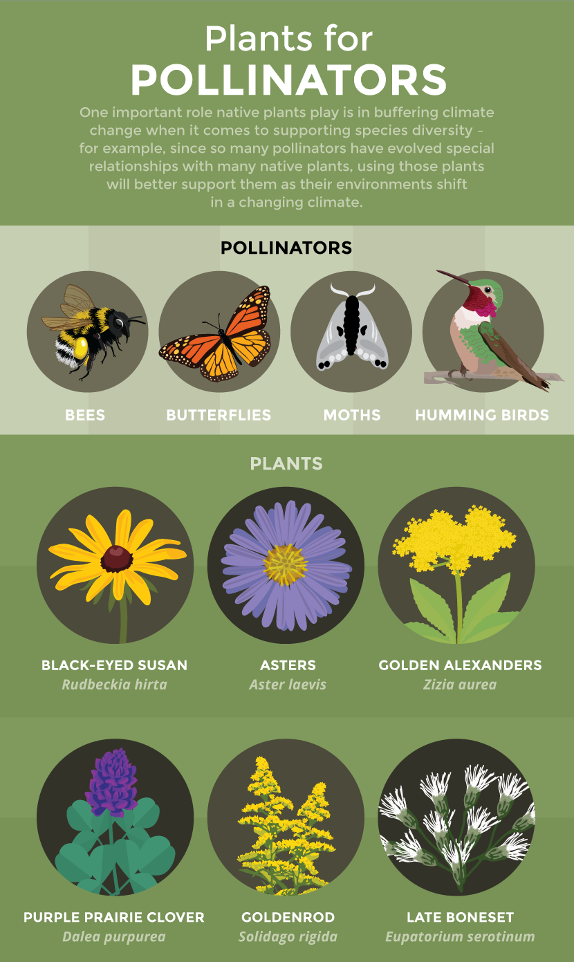 Plants and Pollinators - Gardening for Climate Change