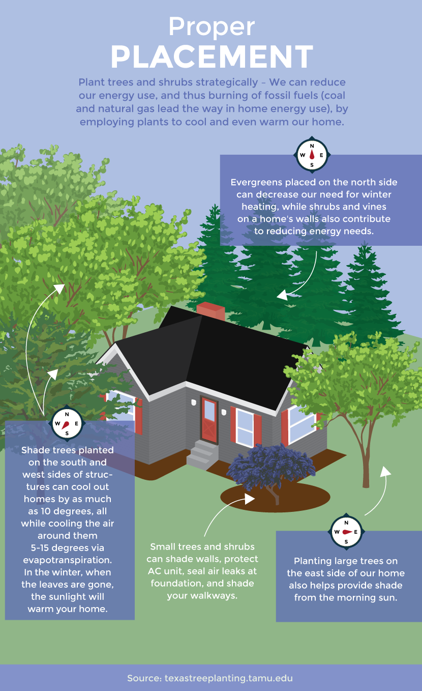 Tree and Shrub Placement For Energy Saving - Gardening for Climate Change