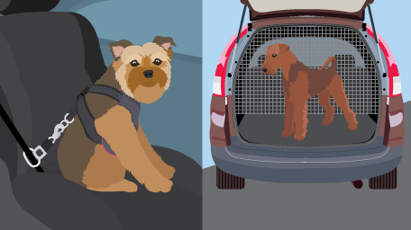 Traveling With Your Dogs