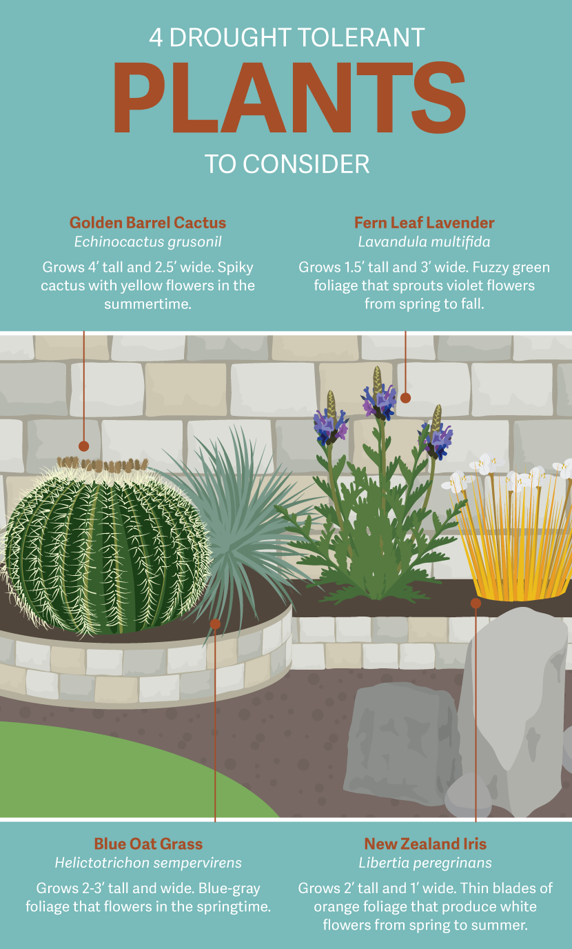Drought Tolerant Plants - Gardening in a Drought