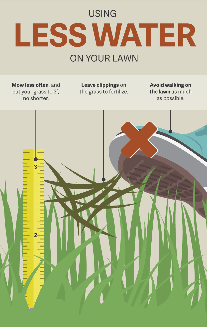 Using Less Water on Your Lawn - Gardening in a Drought
