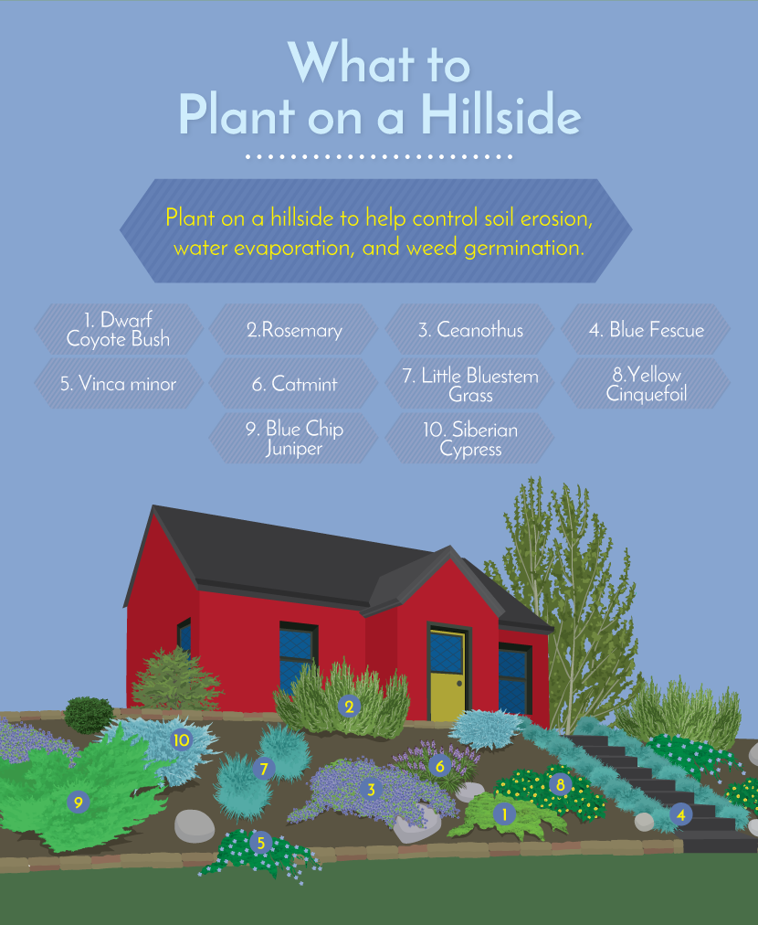What to Plant on a Hillside - Working With Challenging Garden Styles