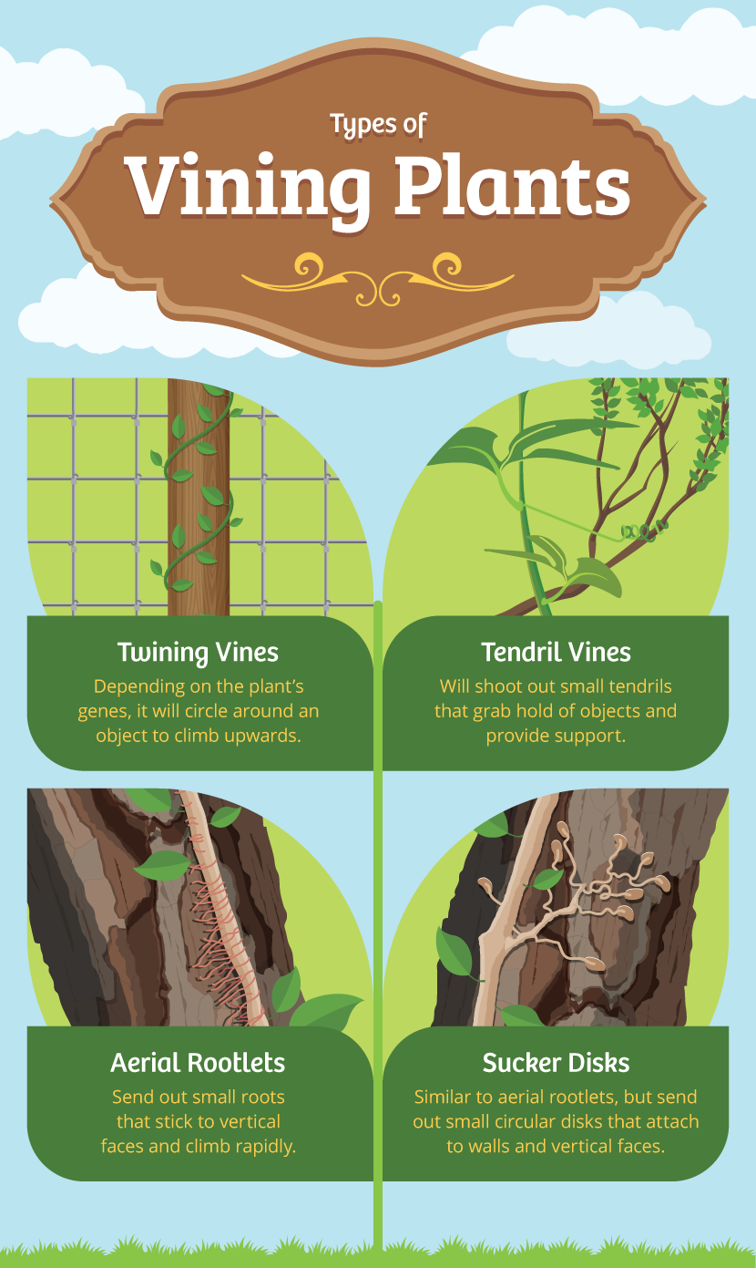 Types of Vines - A Simple Guide to Gardening With Vines