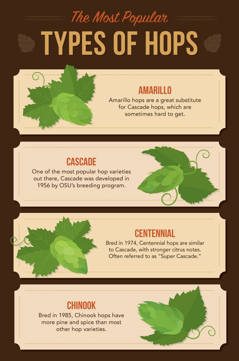 Most Popular Types of Hops - Grow Your Own Hops For Homemade Beer