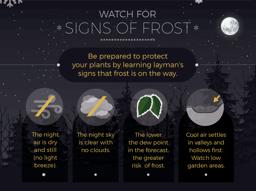 Signs of Frost - Protect Plants from Frost